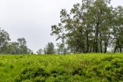 Förtöja hög venn i Malmedy, Belgien på en dimmig molnig dag fotografering för bildbyråer