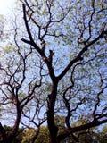 Förtjäna av träd Arkivfoto