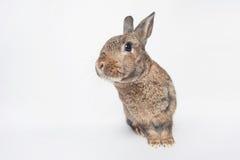 Förtjusande behandla som ett barn kaninen som glatt stirrar Arkivfoton