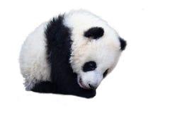 Förtjusande behandla som ett barn panda熊猫 arkivfoton