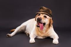Förtjusande blondin labrador i brun hatt Royaltyfria Foton