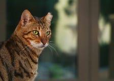 Förtjusande Cat Pictures royaltyfria bilder