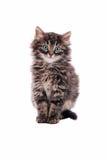 Förtjusande fluffig strimmig kattkatt Arkivfoton