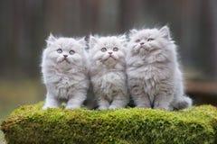 Förtjusande fluffiga kattungar utomhus Fotografering för Bildbyråer