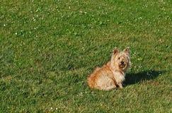 Förtjusande Fuzzy Dog Royaltyfri Fotografi