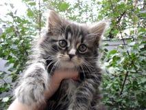 Förtjusande gullig liten randig grå fluffig kattunge royaltyfria foton