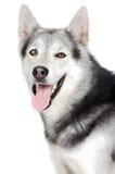 förtjusande hund Royaltyfri Bild