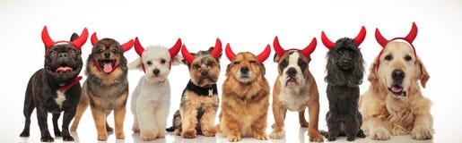 8 förtjusande hundkapplöpning som tillsammans poserar för halloween royaltyfria bilder