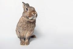 Förtjusande kanin på en vit bakgrund Arkivfoton