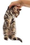 förtjusande katt fotografering för bildbyråer