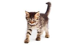 förtjusande katt royaltyfria bilder