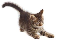 förtjusande katt arkivfoton