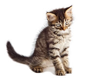 förtjusande katt arkivfoto