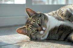 förtjusande katt Arkivbild