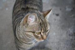 förtjusande katt Royaltyfri Fotografi