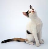 förtjusande katt arkivbilder