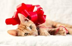 Förtjusande katt med den röda pilbågen Royaltyfri Foto