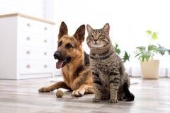 Förtjusande katt och hund som tillsammans hemma vilar arkivfoto