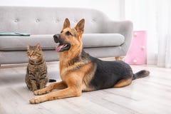 Förtjusande katt och hund som tillsammans inomhus vilar nära soffan royaltyfri foto