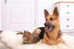 Förtjusande katt och hund som tillsammans vilar på den luddiga filten arkivbilder