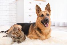 Förtjusande katt och hund som tillsammans vilar på den luddiga filten royaltyfri fotografi