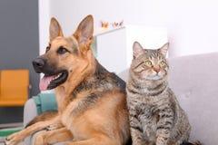 Förtjusande katt och hund som tillsammans vilar på soffan royaltyfri fotografi