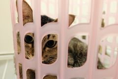 Förtjusande katt som ligger i korg Älskvärda gulliga kattungar hemma Fotografering för Bildbyråer