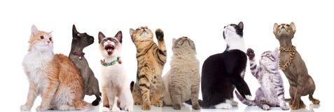 Förtjusande katter som ser upp och att sid på vit bakgrund royaltyfri foto