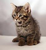 förtjusande kattunge 3 Arkivbild