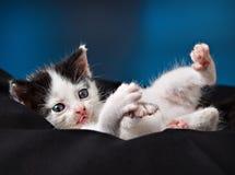 förtjusande kattunge little Royaltyfri Foto