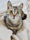Förtjusande kattunge som ser dig royaltyfria foton