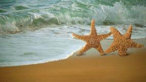 förtjusande längs att gå för strandfiskstjärna Royaltyfri Bild