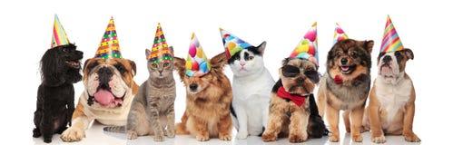 Förtjusande lag av födelsedaghusdjur av olika avel royaltyfri foto