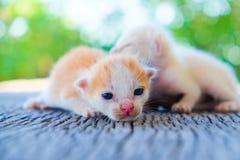 Förtjusande ligga för kattunge två Royaltyfria Bilder