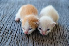 Förtjusande ligga för kattunge två Arkivfoto
