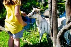 Förtjusande liten flicka som matar en get på zoo på varm solig sommardag Fotografering för Bildbyråer