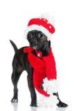 Förtjusande liten svart hund i en hattadn-halsduk fotografering för bildbyråer