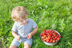 Förtjusande litet barn med bunkejordgubbar på organisk lantgård Royaltyfri Fotografi