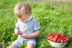 Förtjusande litet barn med bunkejordgubbar på organisk lantgård Arkivfoto