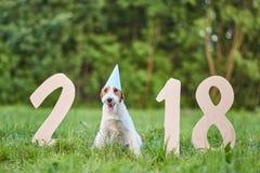 Förtjusande lycklig foxterrierhund på greetinen för nytt år för parkera 2018 royaltyfria foton