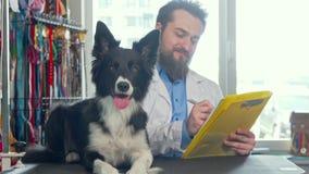 Förtjusande lycklig sund hund som vilar på undersökningstabellen, veterinär som arbetar på baksidan arkivfilmer