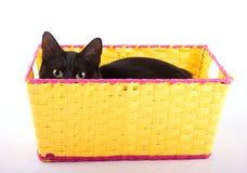 Förtjusande nederlag för svart katt i en gul korg arkivfoton