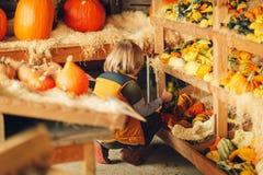 Förtjusande pys som väljer halloween pumpa arkivbild