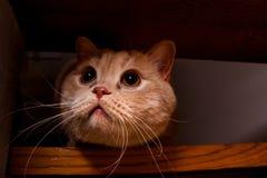 Förtjusande röd katt Arkivfoto