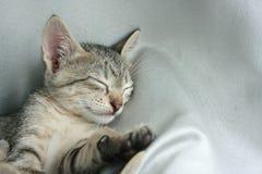 Förtjusande rolig gullig sömn för öga för kattungekattslut tätt på mjuk vit torkdukesäng royaltyfri foto