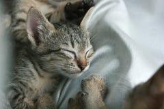 Förtjusande rolig gullig sömn för öga för kattungekattslut tätt på mjuk vit torkdukesäng arkivbilder