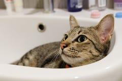 Förtjusande rolig katt som ligger i det vita vaskbadrummet bara Arkivfoton