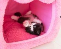 Förtjusande skämtsam kattunge i katthus Royaltyfria Bilder