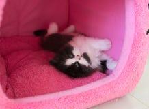 Förtjusande skämtsam kattunge i katthus Arkivfoton