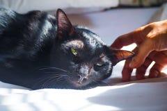 Förtjusande svart katt som sover på säng royaltyfri bild